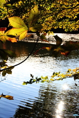 紅葉の石神井公園1