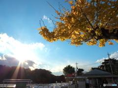 晩秋のの石神井公園5