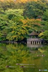 夕暮れの三宝寺池