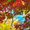 鮮やかに染まる石神井公園