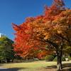 新宿御苑の紅葉2