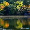 紅葉が始まった石神井公園1