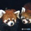双子の姉弟