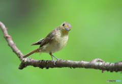 カメラ目線の幼鳥さん