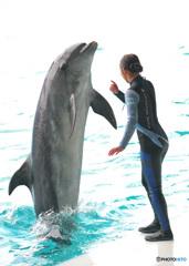 イルカとお姉さんⅢ