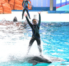 イルカに乗ったお姉さん