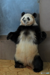 パンダ、大地に立つ!