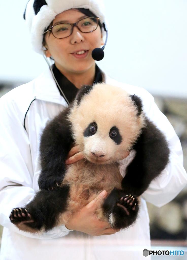 ビックリ顔の仔パンダ