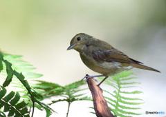 カメラ目線の幼鳥さんⅡ