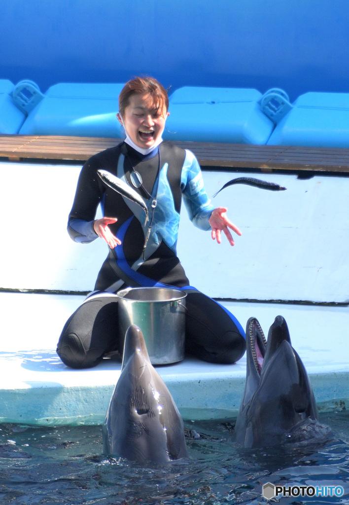 イルカとお姉さん