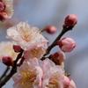 春の訪れⅢ