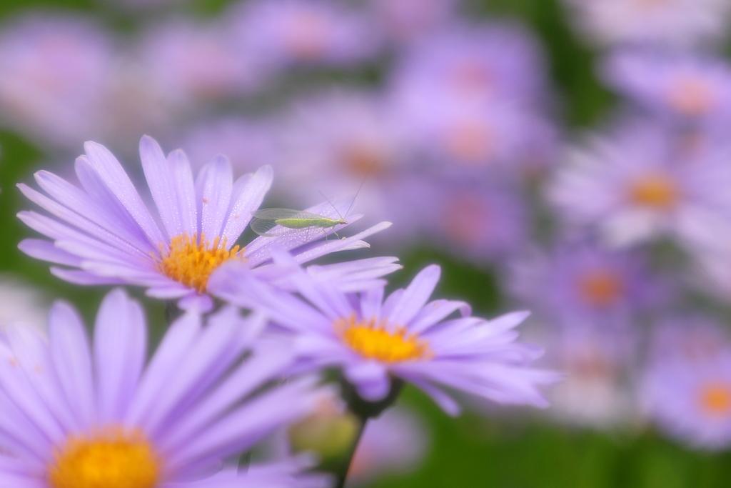 花のミカタ