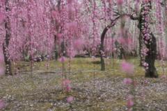 春が降り注ぐ庭で