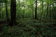 森の中へ ~青木ヶ原樹海~