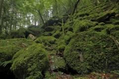 龍の棲む森