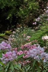 岡寺 石楠花と地蔵