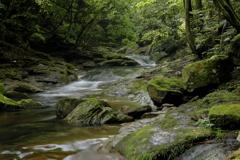 緑に包まれた渓谷