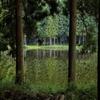 静かな湖畔の森の影から♪