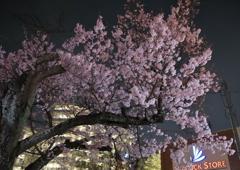 近所の夜桜Ⅰ