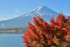 河口湖富士景Ⅲ