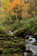木谷沢渓流の秋Ⅱ