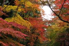 光明寺参道の紅葉