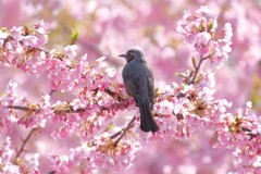 春を告げる鳥たちⅠ