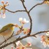 春のご馳走