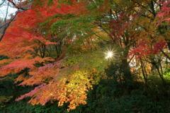 豊彩グラデーション ~私市植物園の秋Ⅱ~