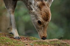 バンビの瞳