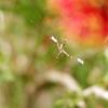 ウチのお庭、きれいでしょ。 ~神戸フルーツフラワーパーク~