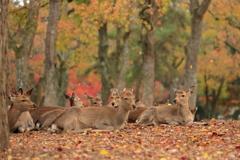 ちょっと休憩 ~奈良公園の秋~