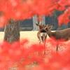 ふたりの世界 ~奈良公園の秋~