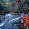 豪華絢爛 ~るり渓の秋Ⅸ~