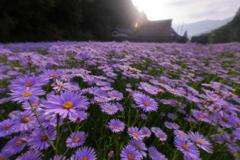 幻の花が咲く村
