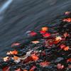 落ち葉、流るる。 ~るり渓の秋Ⅴ~