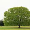 何処かで見た木に似てる
