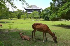 小鹿と東大寺