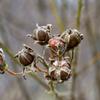 真冬の木の実