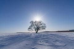 Sun & energetic tree