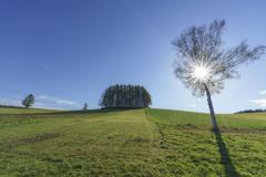 The Sun Hill