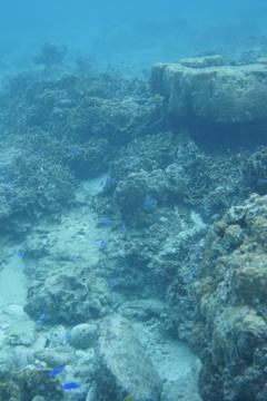 トケイ浜の珊瑚