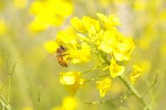 冬のミツバチ