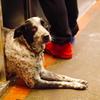 ホットドッグ屋の番犬