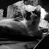 空き家に住むネコ