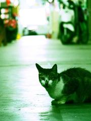 東門市場の二階のネコ