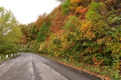 秋色なドライブコース