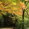 高山城跡の紅葉