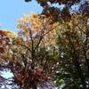 秋の色彩*****