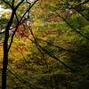 高山城跡の紅葉****